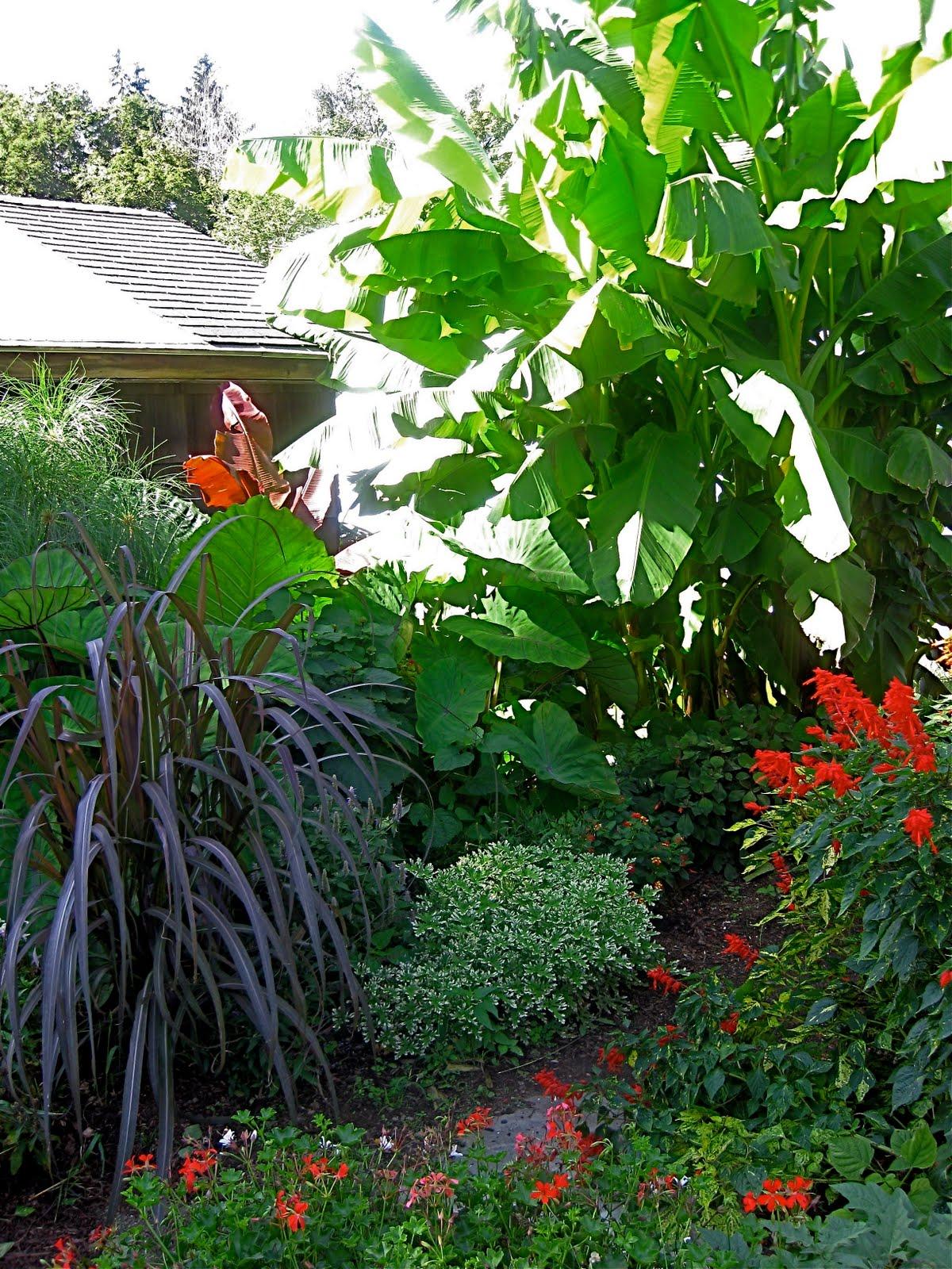 Hardy kiwi logee 39 s plants for home garden blog - Hardy houseplants ...