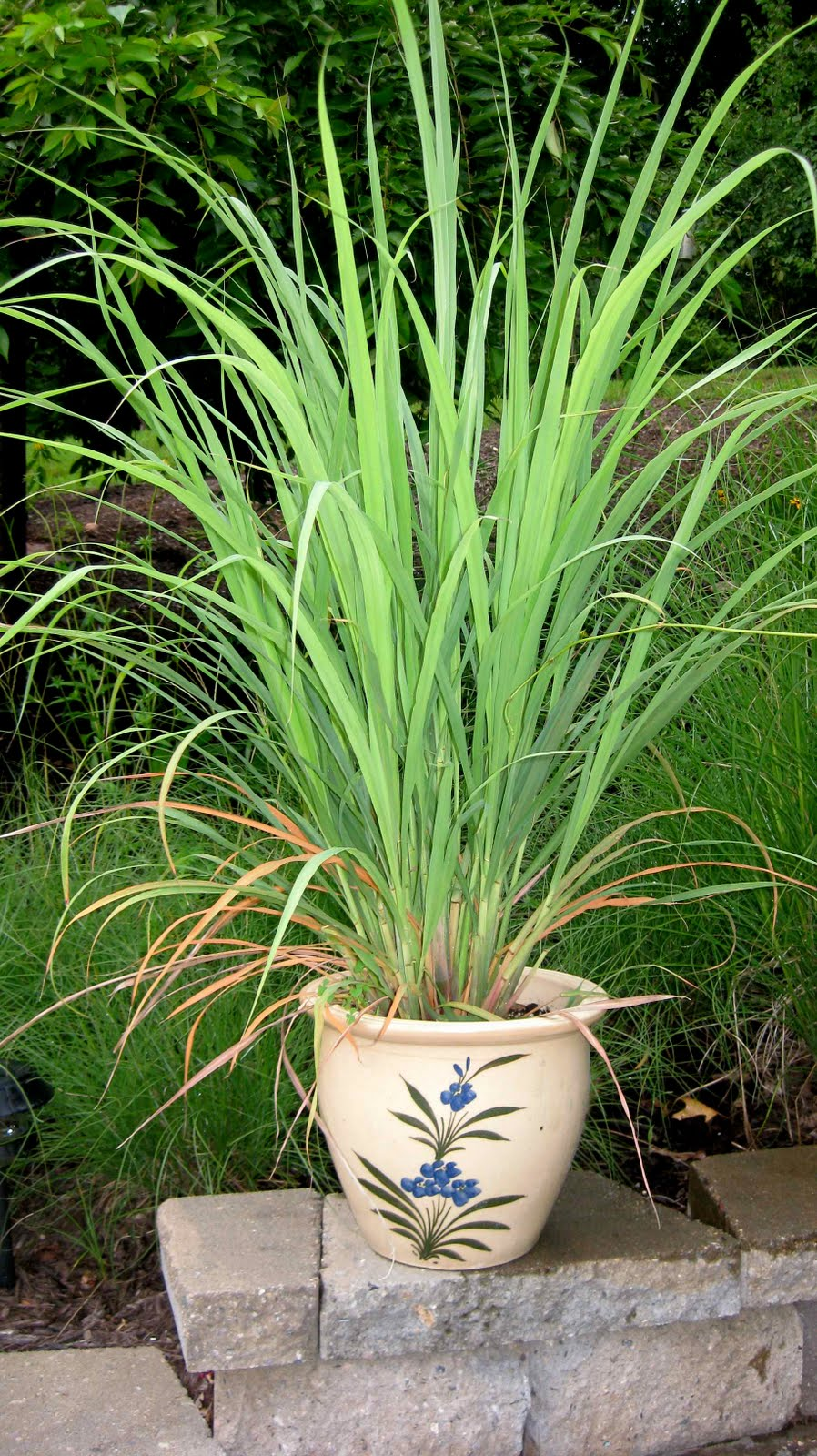 Keep Your Tropical Plants Looking Good! | Logee's Plants ...