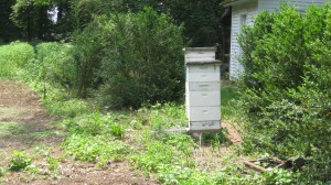 Two Hives that survived last winter