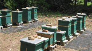Lots of Hives