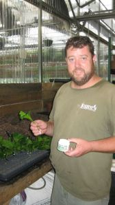 Kory, Logee's hibiscus grower.