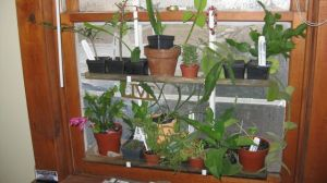 Plants on a window rack