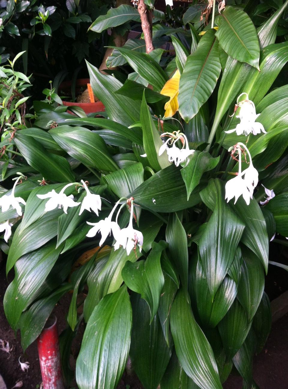Image Result For Best Fragrant Flowers For Garden