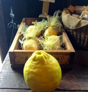 16Ponderosa Lemon